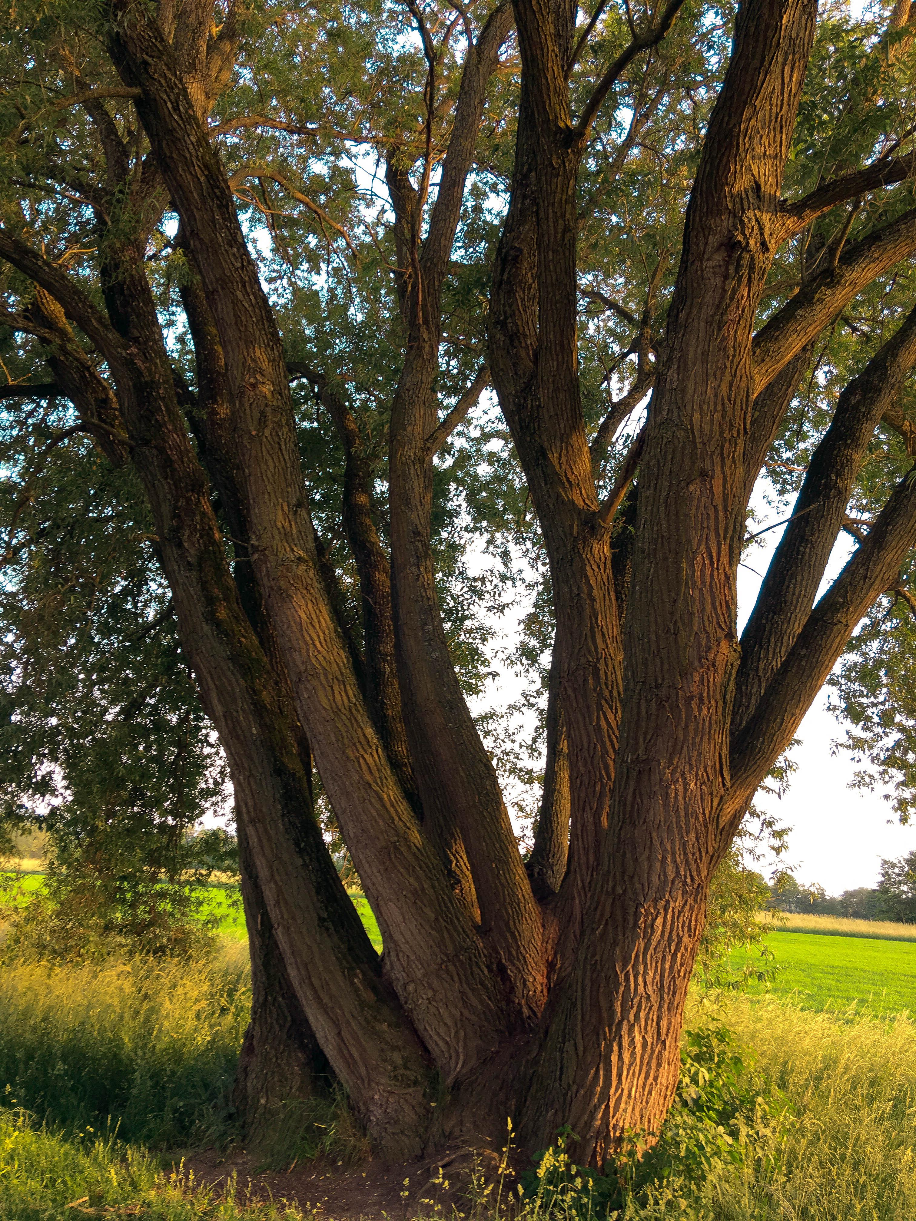 Entspannt wie ein Baum im Frühling